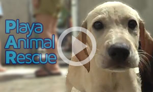 Livin' Playa - Playa Animal Rescue - Playa del Carmen Real Estate