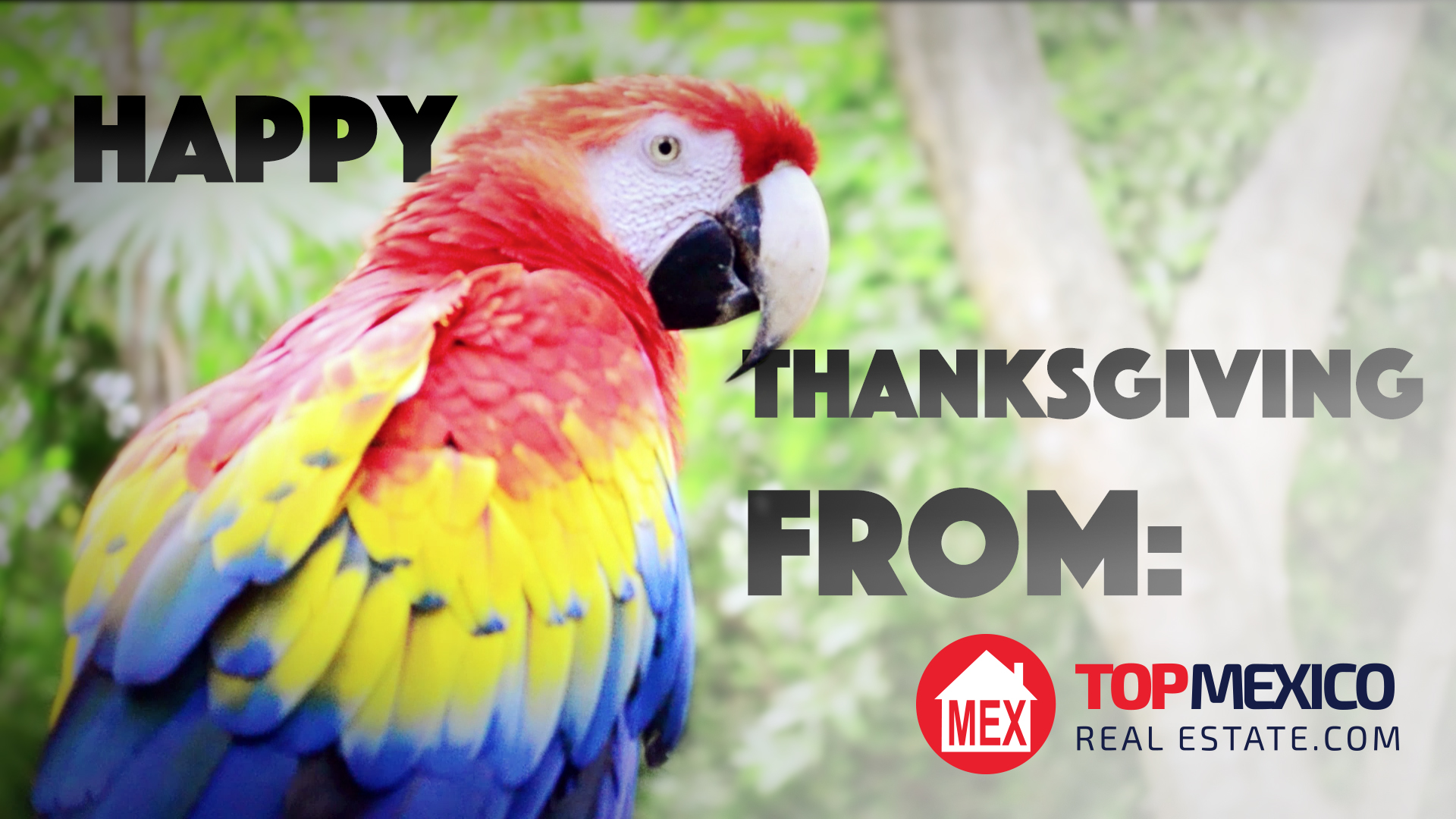 Thanksgiving Message 2014   TOPMexicoRealEstate com