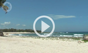 A Quiet Walk on the Rocks of Sirenis Beach (B)