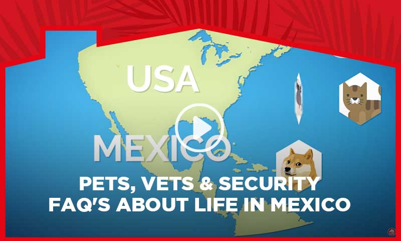 Pets, Vets & Security - FAQ's about life in Mexico