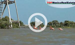 Playa Kuka